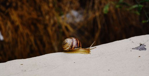 Small snail crawling on top of a concrete wall