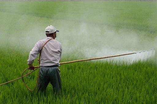 cotton pesticides