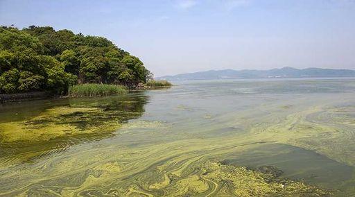 cyanobactery